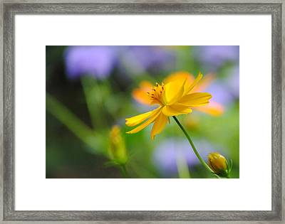 A Delicate Touch Of Orange Framed Print by William Martin