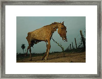 A Desiccated Horse Carcass Propped Framed Print
