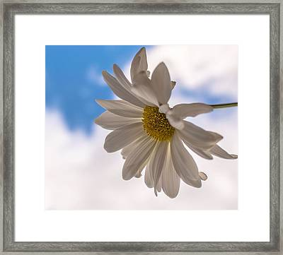 A Different Daisy Framed Print