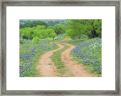 A Dirt Road Lined By Blue Bonnets Of Texas Framed Print