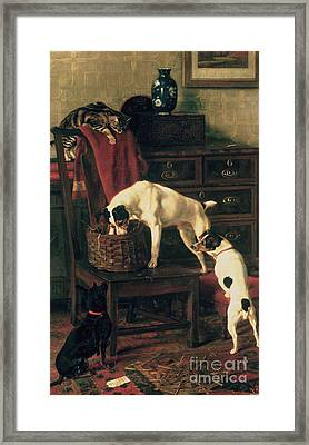 A Discreet Inquiry Framed Print by Rupert Arthur Dent