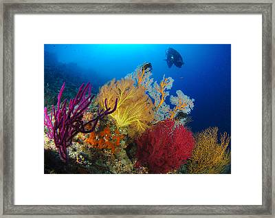 A Diver Looks On At A Colorful Reef Framed Print by Steve Jones