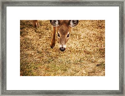 A Doe Encounter Framed Print