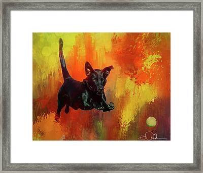 A Dog And Her Ball Framed Print by Gloria Anderson