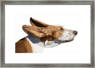 A Dog In The Wind Framed Print by Don Hammond