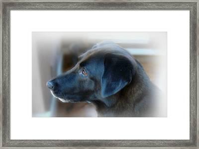 A Dog Must Have A Secret Place Framed Print