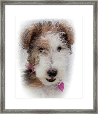Framed Print featuring the photograph A Dog Named Butterfly by Karen Wiles