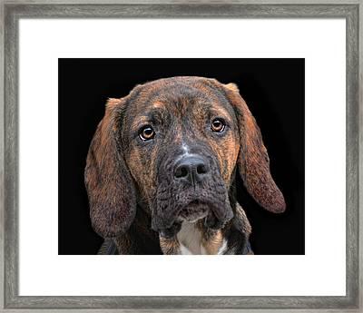 a dog named Lucifer Framed Print by Joachim G Pinkawa