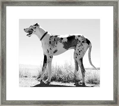 A Dog Named Picasso Framed Print by Robert Knight