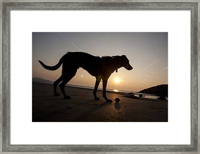 A Dog With His Ball At Sunset Framed Print