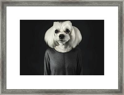 A Dog's Life Framed Print by Aytugul Turk