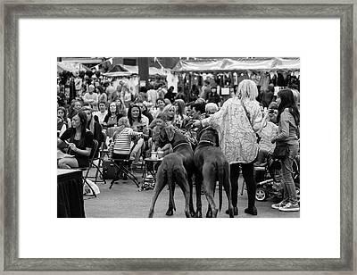 A Dogs Life Framed Print