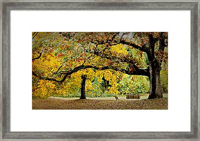 The Old Oak Tree Framed Print by Diana Angstadt
