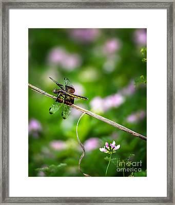 A Dragonfly Break Framed Print by Tamyra Ayles