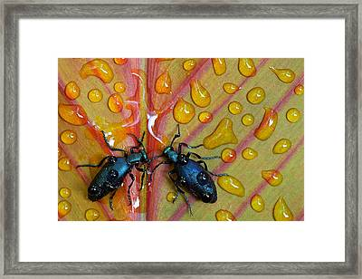 A Drink For Two Framed Print by Stephen Clough