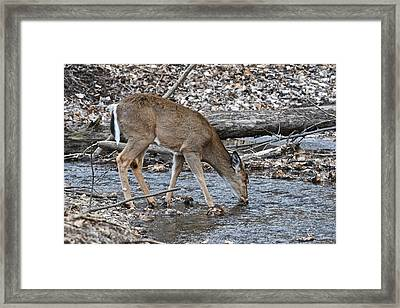 A Drink From A Cool Stream Framed Print