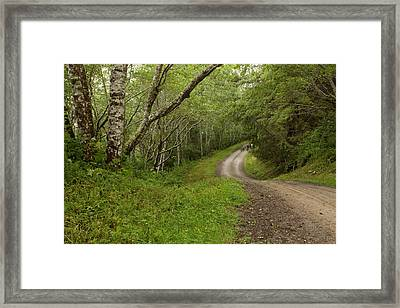 A Drive Thru The Woods Framed Print by Denise Dethlefsen