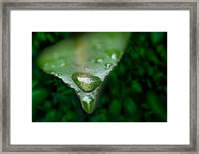 A Drop Framed Print by Dan Holm
