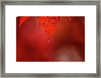 A Drop Of Life Framed Print