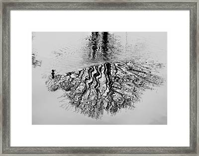 A Duck Drawing On The Puddle Of Water Framed Print