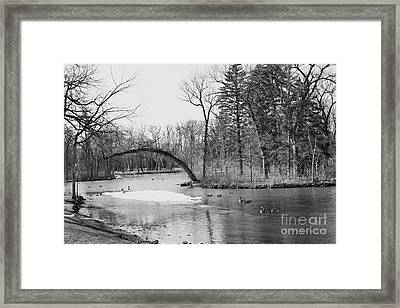 Framed Print featuring the photograph A Duck Pond by Cendrine Marrouat