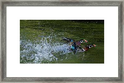 Framed Print featuring the photograph A Duck Race by Thanh Thuy Nguyen