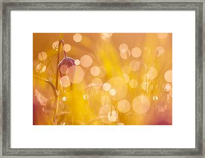 A Fairies Place IIi - Chess Flower Framed Print