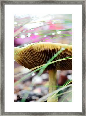 A Fairy's World Framed Print