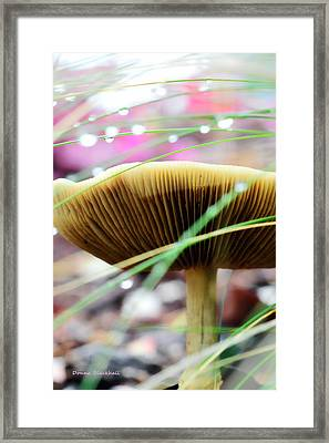 A Fairy's World Framed Print by Donna Blackhall