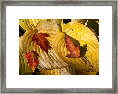 A Fall Contrast Framed Print