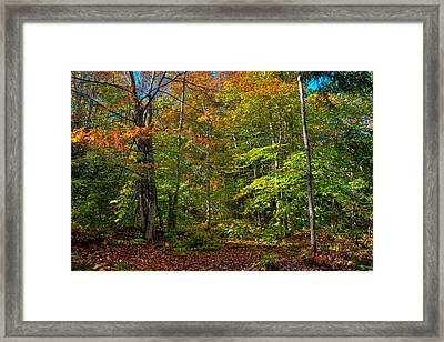 A Fall Day On The Trail Framed Print by David Patterson