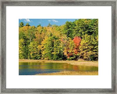 A Fall Pond   Framed Print