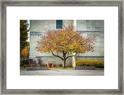 A Fall Tree Framed Print