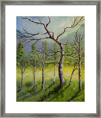 A Family Of Trees Framed Print
