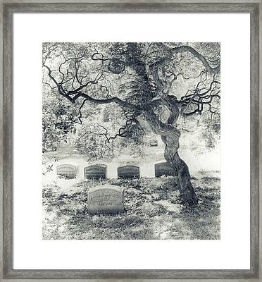 A Family Tree  Framed Print