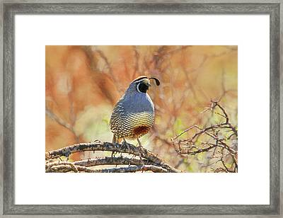 A Feather In His Cap Framed Print by Donna Kennedy