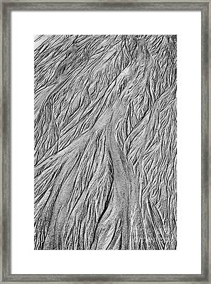 A Feeling Of Feathers Framed Print by Tim Gainey