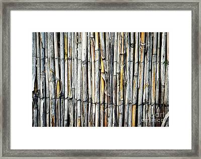 A Fence With Cane Grass Framed Print
