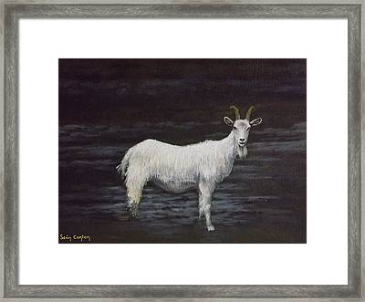 A Feral Goat On The Burren Framed Print by Sean Conlon