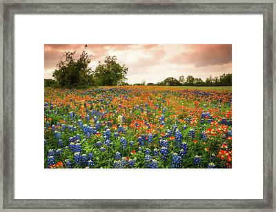 A Field Of Bluebonnet And Indian Paintbrush - Wildflower Field In Texas Framed Print by Ellie Teramoto