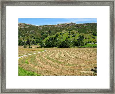 A Field Of Freshly Mown Hay Drying In Great Langdale Framed Print by Louise Heusinkveld