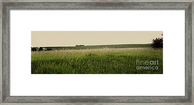 Framed Print featuring the photograph A Field Of Grass by Sandy Adams