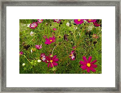 A Field Of Wild Flowers Growing Framed Print by Todd Gipstein