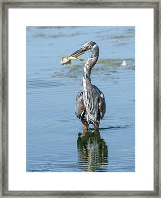 A Fine Breakfast Framed Print