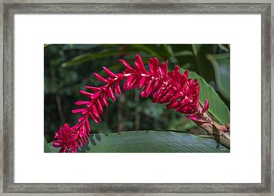 A Flair For Drama Floral Framed Print