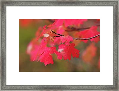 A Flash Of Autumn Framed Print