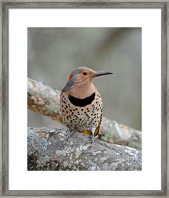 A Flicker Of Sunshine In Winter Framed Print