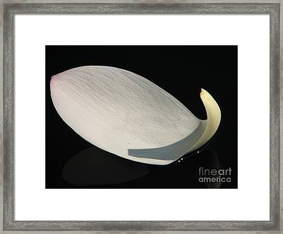 A Floating Lotus Petal Framed Print