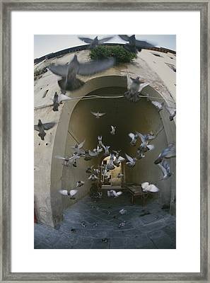 A Flock Of Pigeons Fly Out Of An Arched Framed Print by Raul Touzon