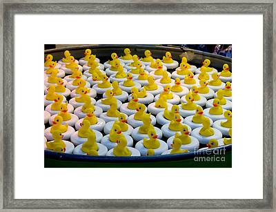 A Flock Of Rubber Duckies Framed Print